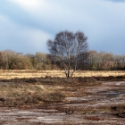 De heide in de winter